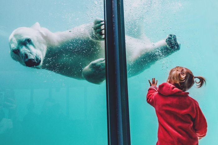 animal-aquarium-child-1639949